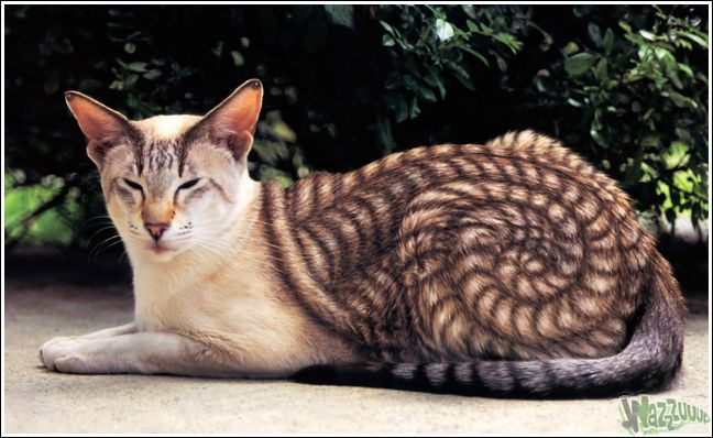 раскрашеные кошки